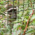 monkey-995223_1280