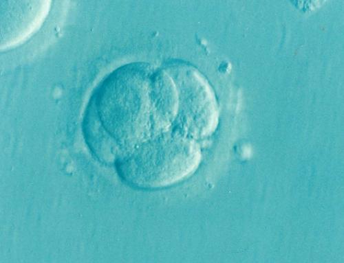 Sądowy spór o zamrożone embriony