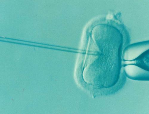 Francuska Akademia Medycyny przeciw in vitro bez ojca